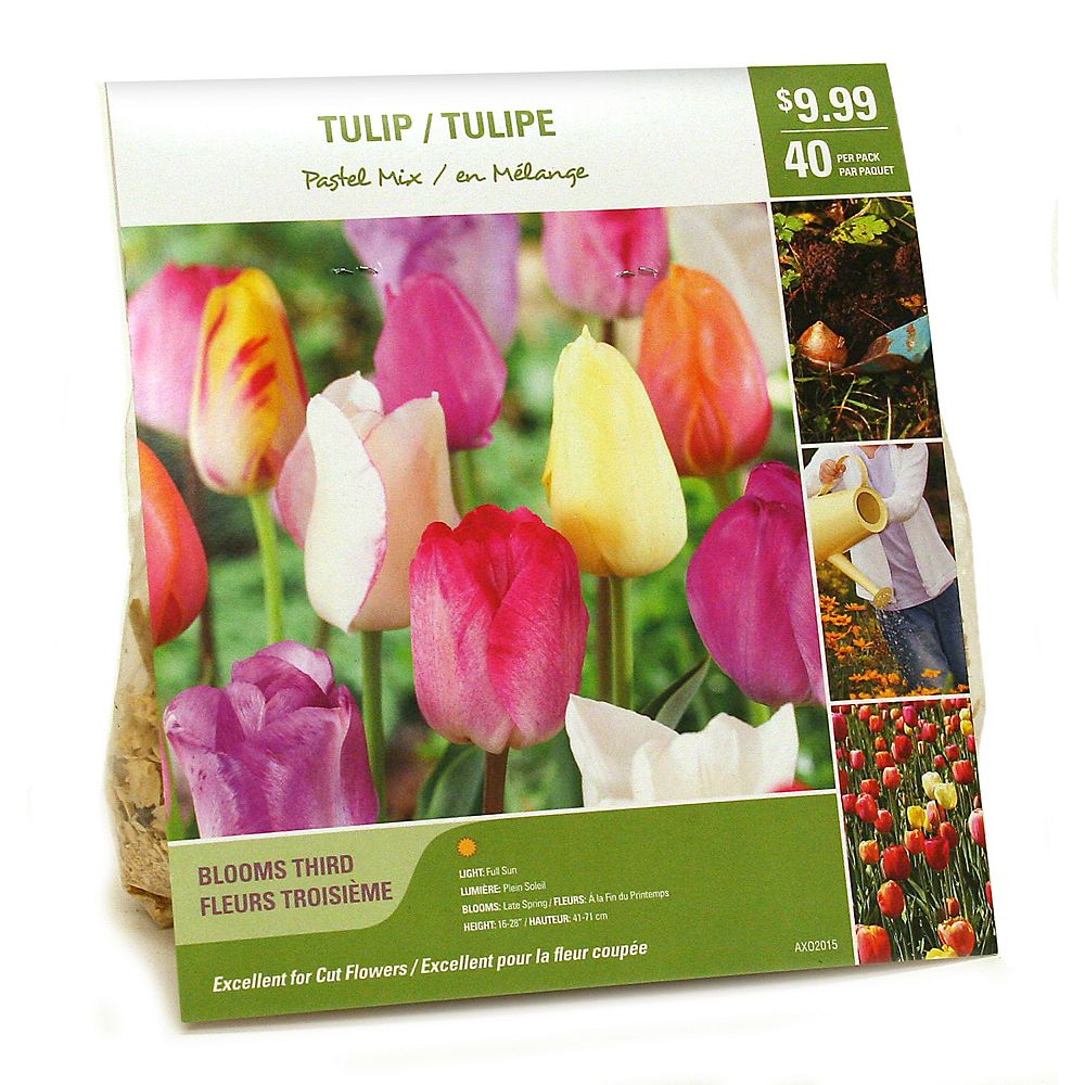 Van Zyverden Tulip Pastel Mix Flower Bulbs (40-Pack)