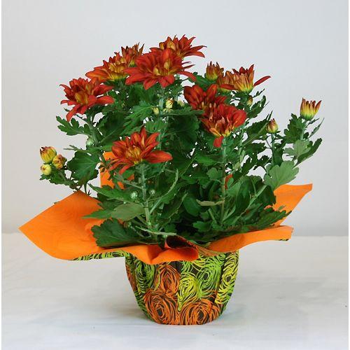 6-inch Chrysanthemum with Decoration