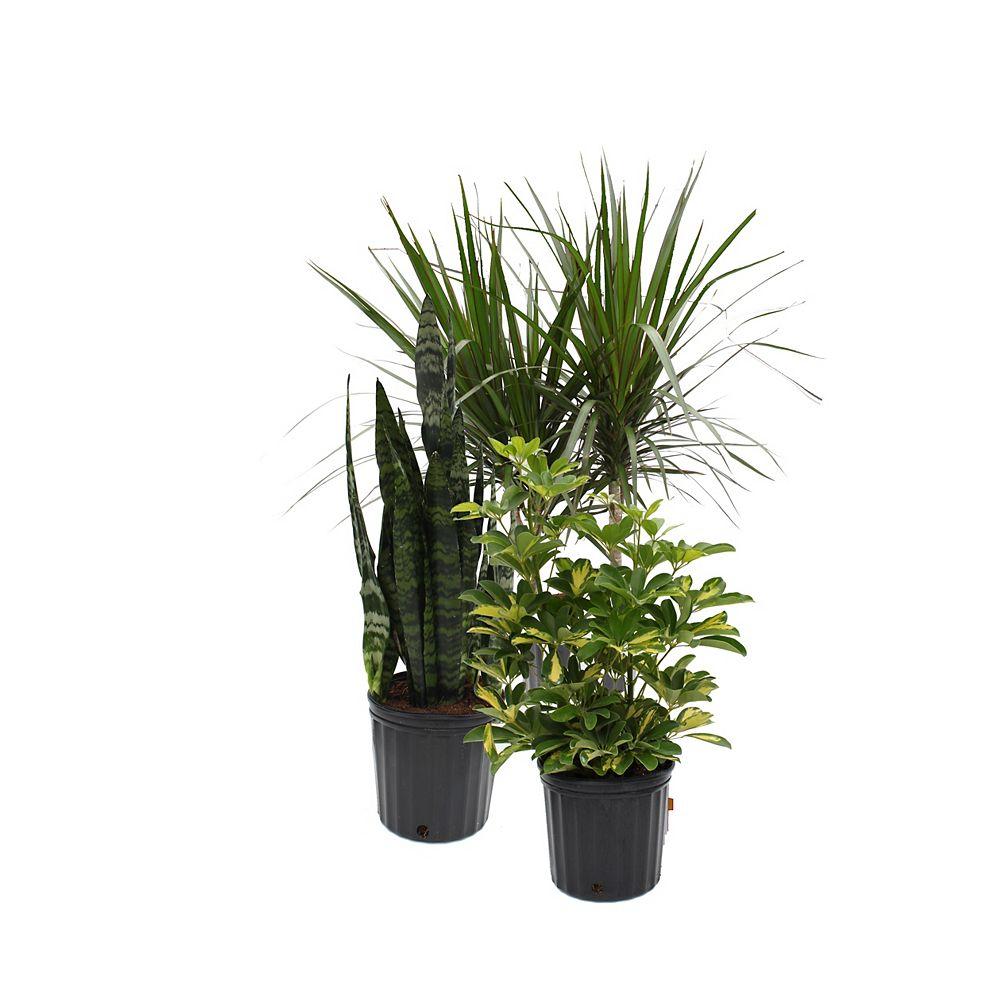 Rainbow 10-inch Assorted Tropical Plants