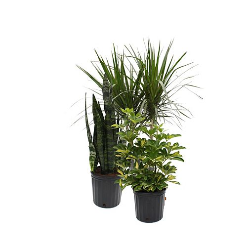 10-inch Assorted Tropical Plants
