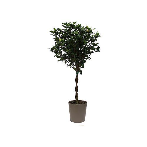 Gardenia Tree, 10 inch