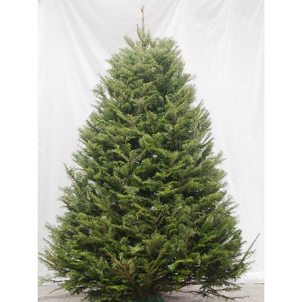 THD Christmas Tree 5-6 ft.