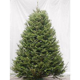Christmas Tree 5-6 ft.