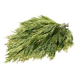 Fresh Cut Decorative Boughs (Assorted Styles)