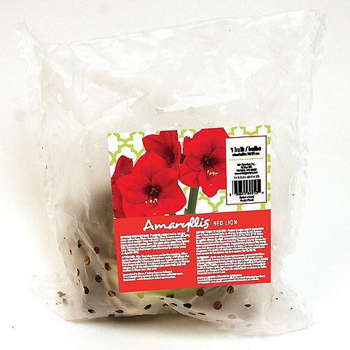 Amaryllis Red Lion Bulbs