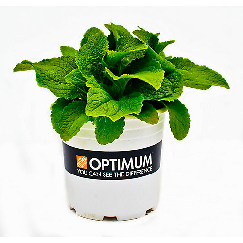 Optimum Perennial - 2 Gallon