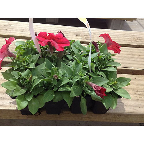 PBS Gardeners (12-Pack)