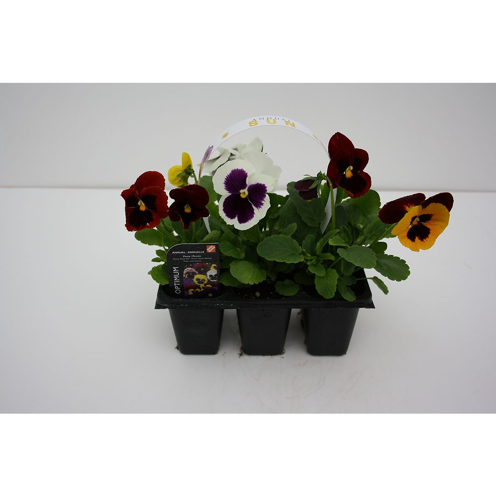 HDG Spring Annuals (6-Pack)