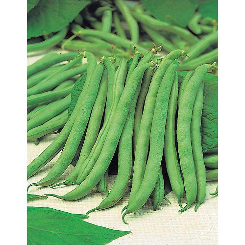 Bean Bush Tendergreen Seeds