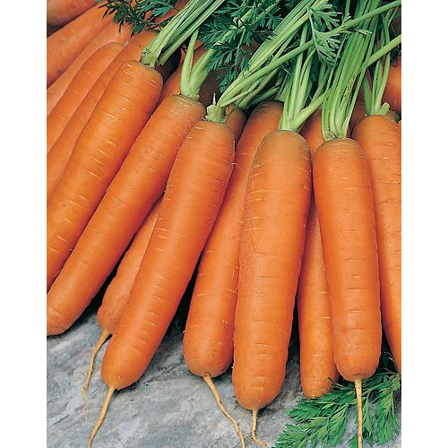 Carrot Early Nantes 2 Vegetable Seed Tape