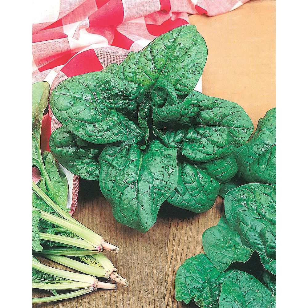 Mr. Fothergill's Seeds Spinach America Seeds