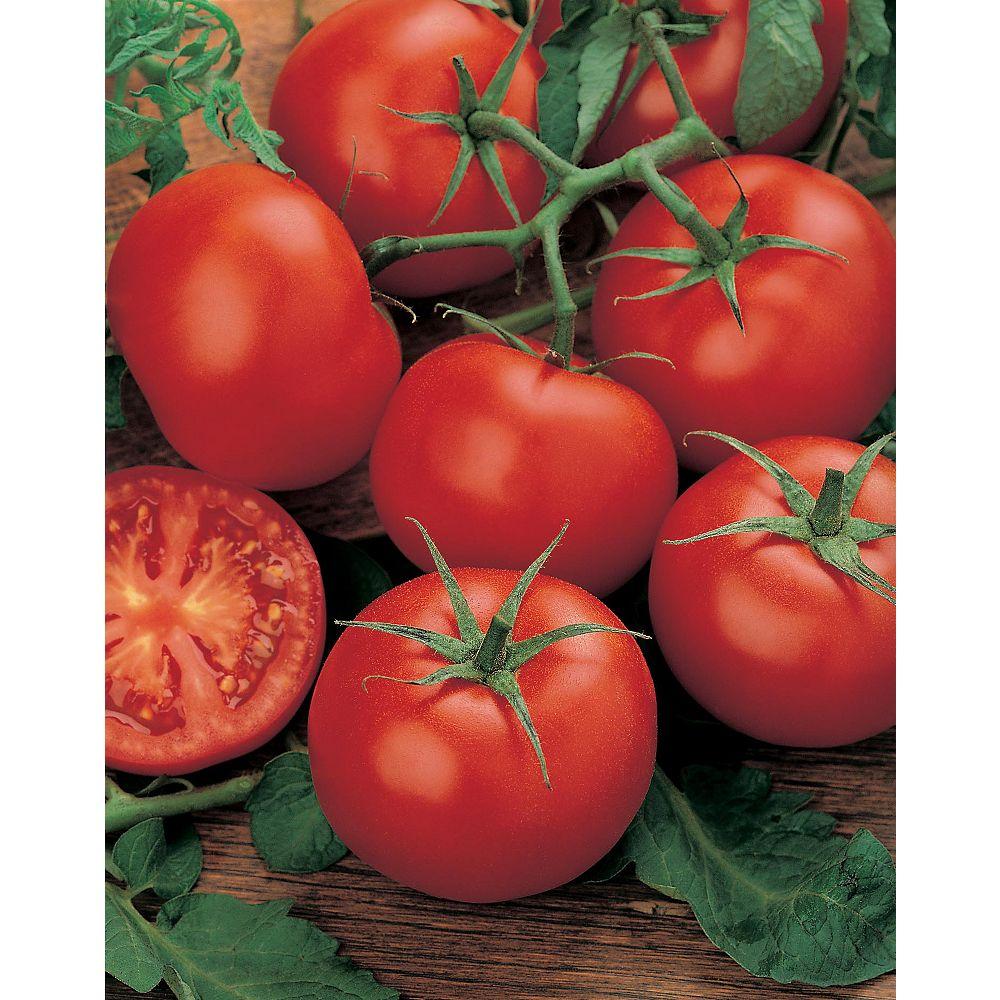 Mr. Fothergill's Seeds Tomato Moneymaker Seeds