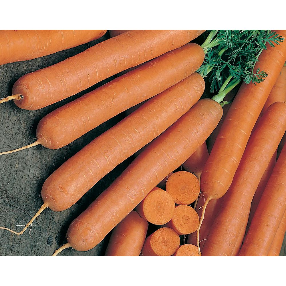 Mr. Fothergill's Seeds Carrot Early Nantes 2 Vegetable Seed