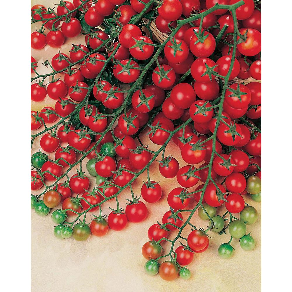 Mr. Fothergill's Seeds Tomato Sweet Million F1 Seeds