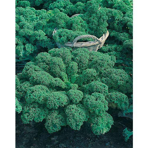 Mr. Fothergill's Seeds Kale Dwarf Green Curled Seeds