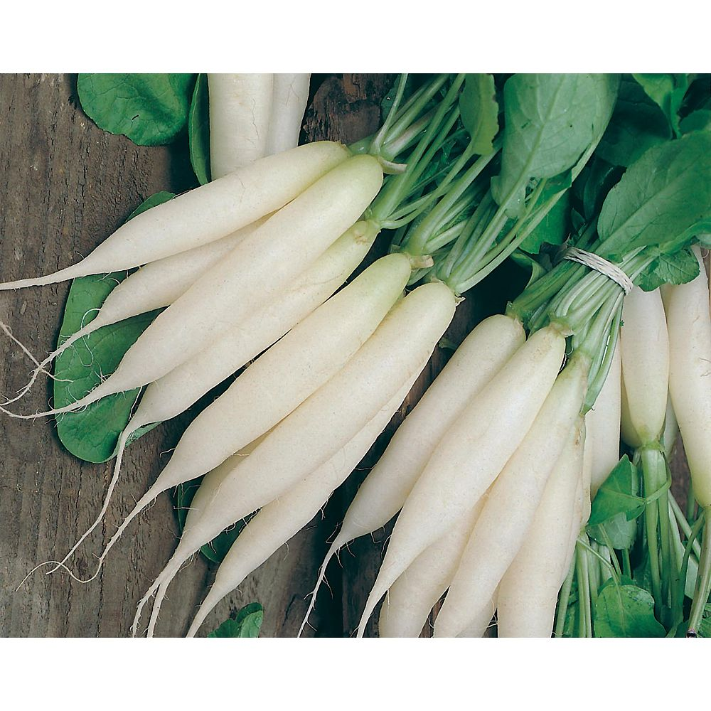 Mr. Fothergill's Seeds Radish Long White Icicle Seeds