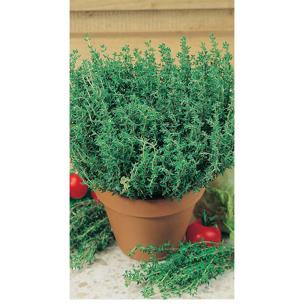 Mr. Fothergill's Seeds Thyme Orange Scented Seeds