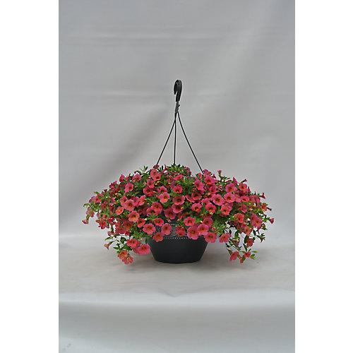 Hanging Basket 11 Pouce
