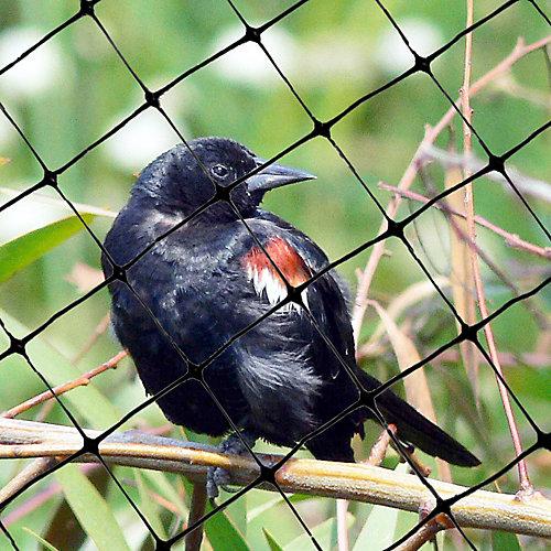 Filet attrape-oiseaux standard 100 ft. x 14 ft. Bird-X