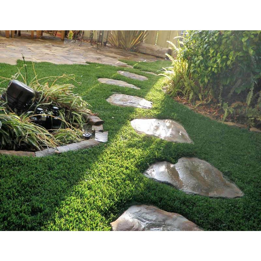 Greenline Classic 65 Fescue 5 ft x 10ft