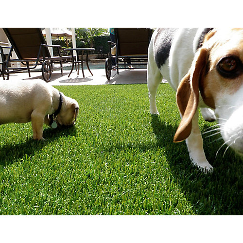 Pet or Sport 60 3 ft. x 8 ft. Artificial Grass for Outdoor Landscape
