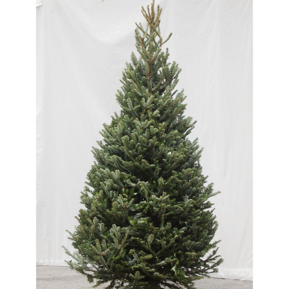 THD Fraser Fir Cross Christmas Tree 6-8 ft.