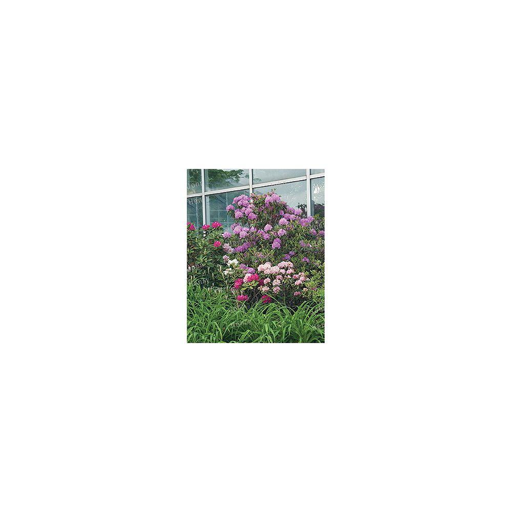 Vigoro 11.35L Rhododendron Bush