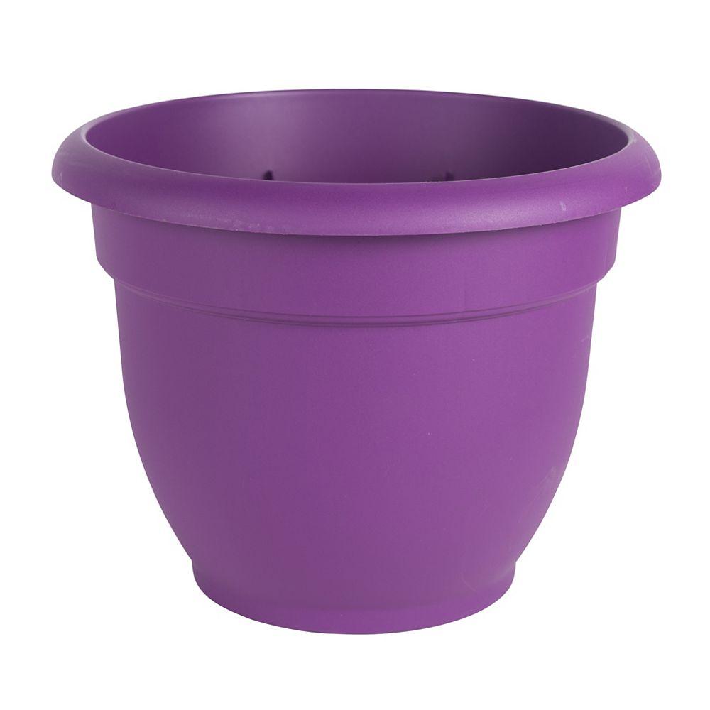 """Bloem 8"""" Jardinière Ariana violet"""