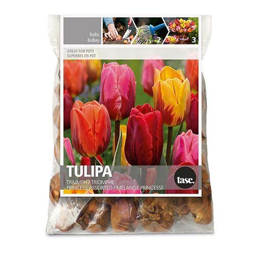 Tulip Triumph Princess  Flower Bulbs (30-Pack)