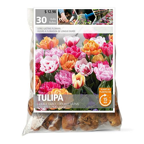 Tulip Double Early Assorted Flower Bulbs (30-Pack)