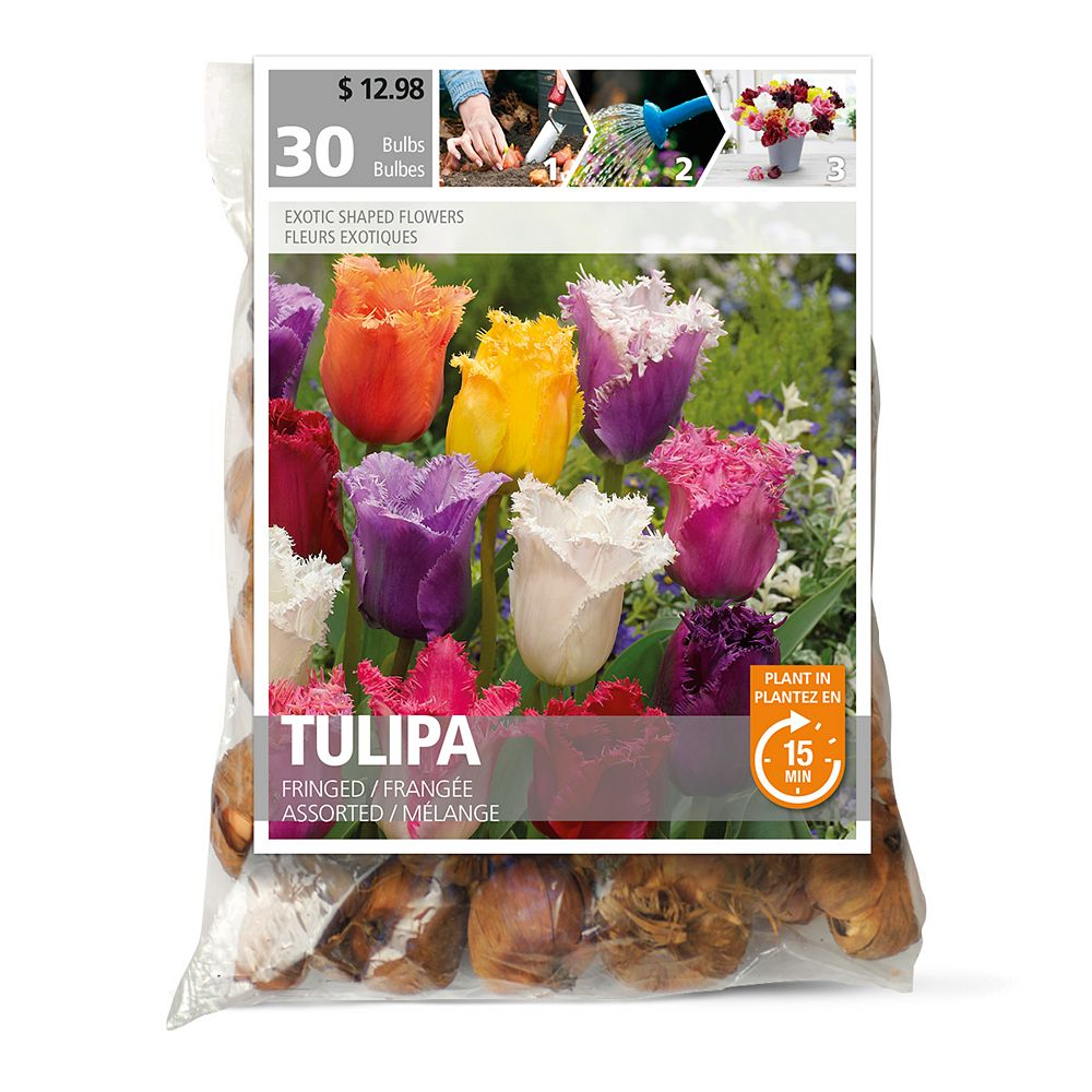 Bulbs are Easy Tulip Fringed Assorted Flower Bulbs (30-Pack)