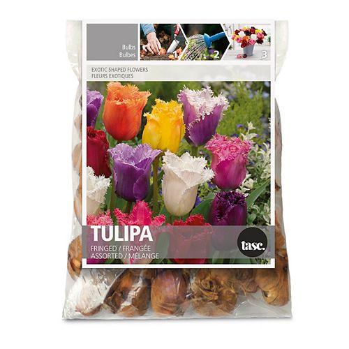 Tulip Fringed Assorted Flower Bulbs (30-Pack)