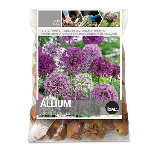 Allium Assorted Assorted  Flower Bulbs (15-Pack)
