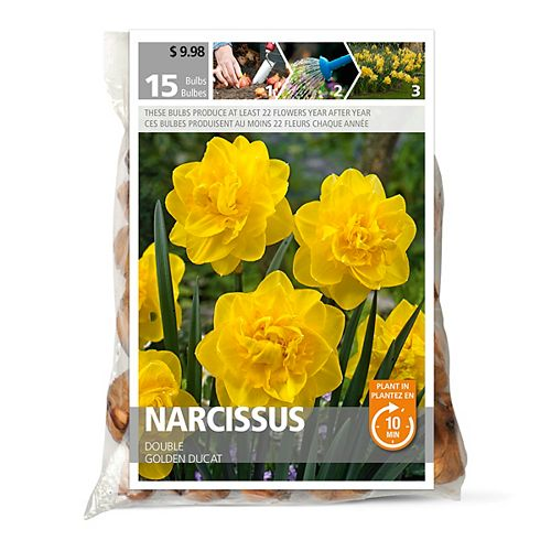 Narcissus Golden Ducat Yellow