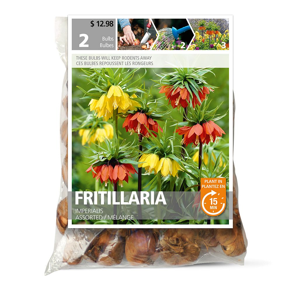 Bulbs are Easy Fritillaria Imperalis Assorted Flower Bulbs (2-Pack)