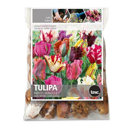 Tulip Parrot Assorted Flower Bulbs (30-Pack)