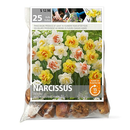 Narcissus Double Flower Bulbs (25-Pack)
