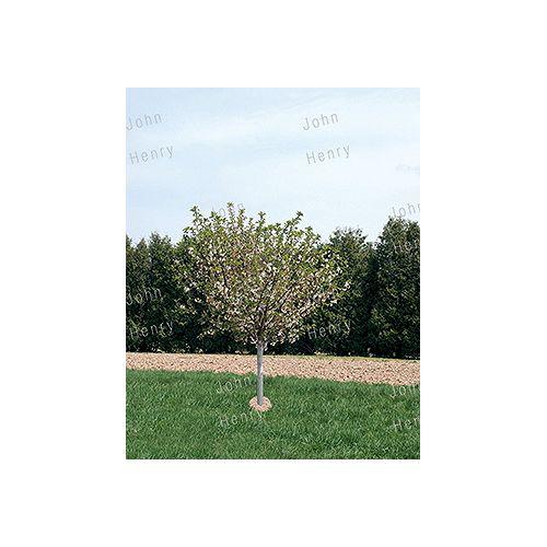 Landscape Basics 26.5L Plum Tree