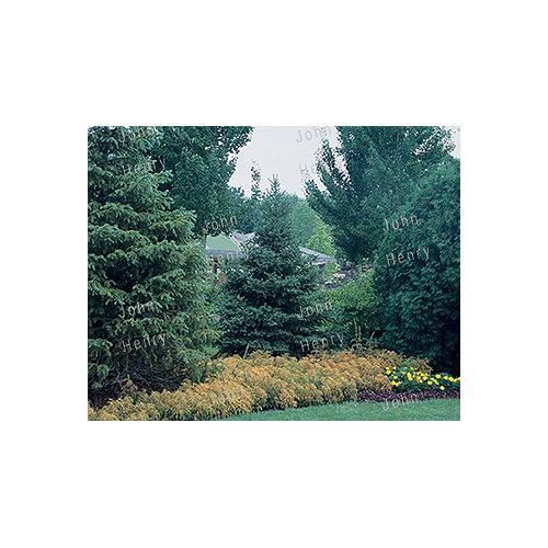 Spruce 3g