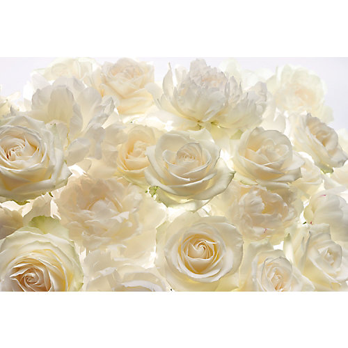 Photo Murale Ivory Rose