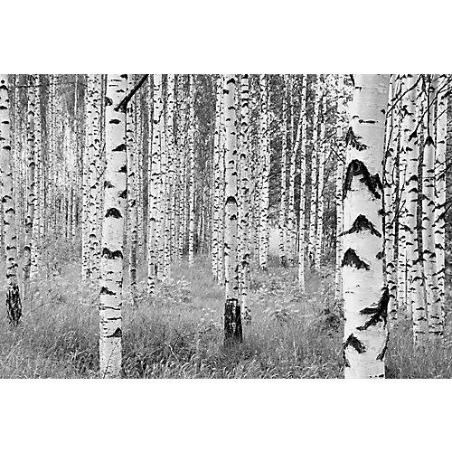 Photo Murale Birch Forest