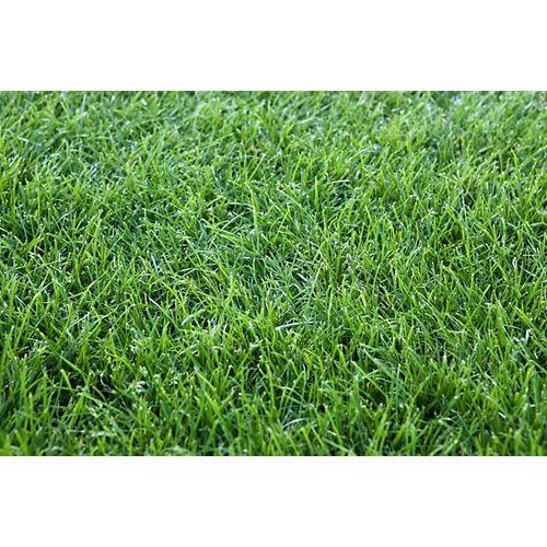 Grass Sod - 500 sq ft