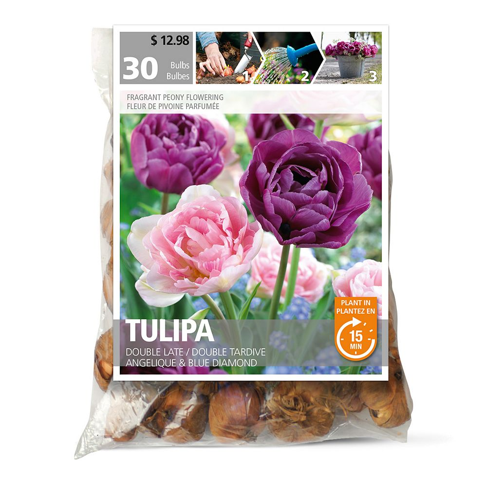 Bulbs are Easy Tulip Double Late Angelique Flower Bulbs (30-Pack)