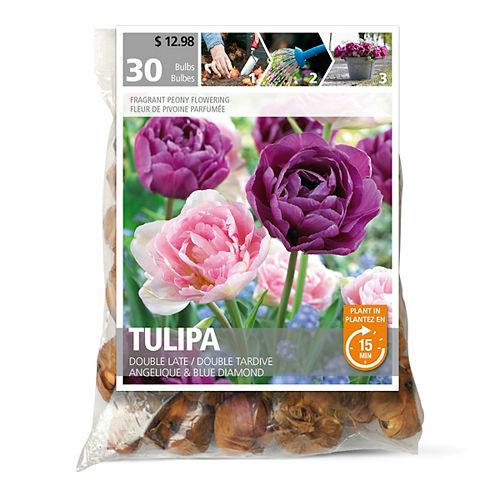 Tulip Double Late Angelique Flower Bulbs (30-Pack)
