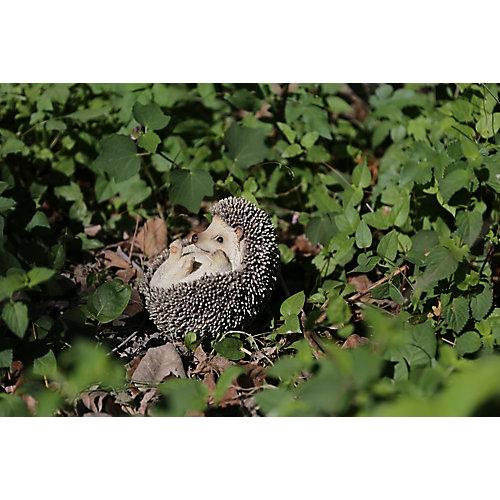 Hedgehog on Back Statue