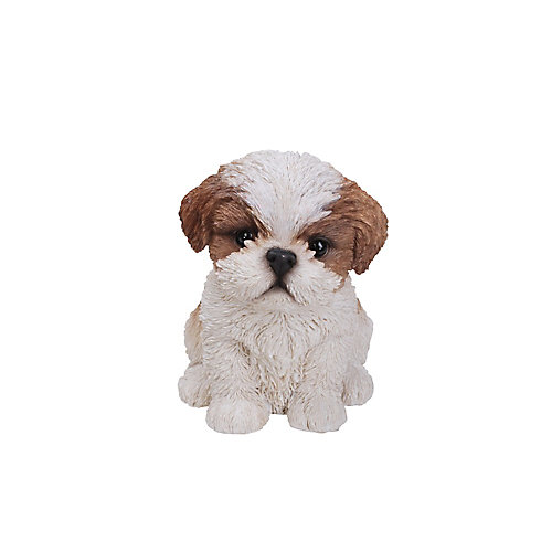 Sitting Shih Tzu Puppy in Brown and White