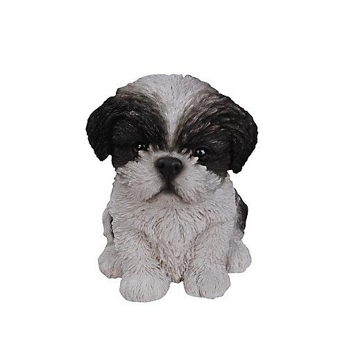 Sitting Shih Tzu Puppy in Black and White