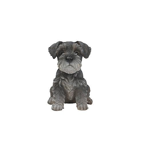 Sitting Schnauzer Puppy