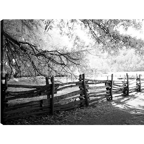 Walk in the Woods' Photographic Print on Wrapped Canvas