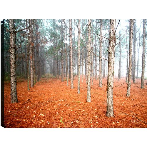 Tree Landscape' Photographic Print on Wrapped Canvas